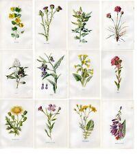 Stampe antiche LOTTO 12 FIORI DI CAMPO Grande Offerta!! 1878 Old Antique prints