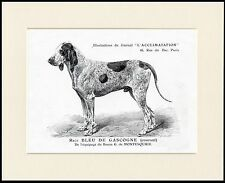GRAND BLEU DE GASCOGNE LOVELY DOG PRINT MOUNTED READY TO FRAME