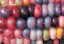 Glass Gem Corn/Native American Colorful Seeds/Pawnee/Osage/Cherok ee Seed/Plant