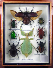 Real Butterfly Insect Bug Taxidermy Display Framed Box Small Set Gift gpasy 01