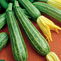Seeds Zucchini Courgette Squash Striped Vegetable Plant Organic Heirloom Ukraine