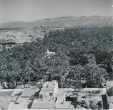 ESPAGNE c. 1950 - La Palmeraie  La Ville  Elche  - Div 10300