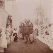 Algérie Dromadaire Photo Amateur Français Colonialisme France Vintage citrate