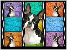 10 BostonTerrier Note Cards Wow! How Cute! And Colorful