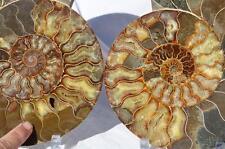 "1358x Cut Split PAIR Ammonite Deep Crystal Cavity 110myo Fossil 225mm XXXLG 9.0"""