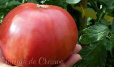10 graines de tomate rare SKORPION une délicieuse tomate d'autrefois heirloom