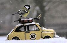 Biglietto d' auguri: Eine PICCOLO CINCIALLEGRA fährt PER SPORT - blu tit, AUTO E