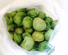 Semillas de Tomatillo verde (Physalis ixocarpa) seeds, llavors