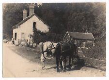 PHOTO ANCIENNE Cheval Chevaux de trait Vers 1950 Village France ?