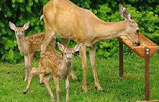 """Hurley Byrd 36"""" Extra Large Free Standing Deer Feeder in Appalachian Hardwoods"""