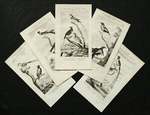 1837 Set of 5 Antique Prints of EXOTIC BIRDS, TROPICAL BIRDS. 184 years old.