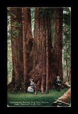 DR JIM STAMPS US CATHEDRAL GROUP BIG TREE GROVE SANTA CRUZ CALIFORNIA POSTCARD
