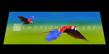 PARROTS  3D MOTION  BOOKMARK  BY EMOTION GALLERY- BM-034