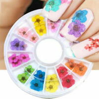 Mixed Dried Flowers 3D Nail Art Decoration Flower Manicure Beauty DIY 12 Colour