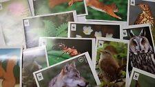 31  Sammelbilder Unser Wald Edeka Sammelbilder WWF