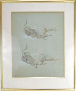 Etude de bouc aquarelle et gouache sur papier 19ème