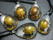 12pc wholesale lots fine insect gold beetle Japanese beetle pendant&necklace