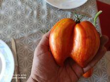 20 Graines récolte 2020 Tomate ancienne ROMAN STRIPES 100% PERMACULTURE