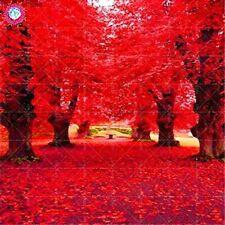2Pc American Red Oak Seeds Beautiful Tree Home Garden Plant Bonsai Free Shipping