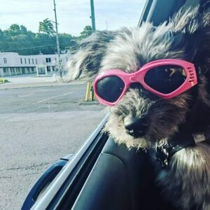 Dog Goggles for UV Protection Sunglasses for Puppy Doggy Pet Size Small Medium