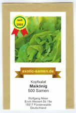 Winter-Kopfsalat - Lactuca sativa var. capitata - Maikönig - 500 Samen
