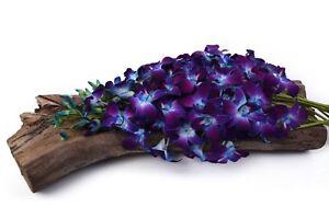 Fresh Cut Orchids - Premium Farm Direct Red Sonia Bom Blue Dendrobium Orchids