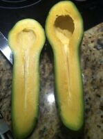 Two GRAFTED Tropical Fruit AVOCADO Live Tree ( Guiro ) Variety 2-3' OFFER