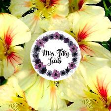 Kapuzinerkresse PEACH MELBA 20 Samen Kresse Garten Kressesamen essbare Blüten