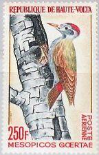 UPPER VOLTA OBERVOLTA 1964 153 C18 Vogel Bird Fauna African Gray Woodpecker MNH