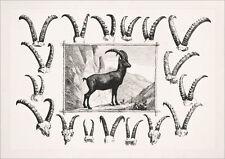 JAGDBILD STEINBOCK HÖRNER GEHÖRN HOCHWILD FAKSIMILE 539 auf Büttenpapier