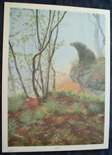 EARLY SPRING BLACK BEAR ARTIST SIGNED LIMITED EDITION LITHOGRAPH ART PRINT #/450