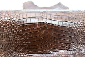 Crocodile Skin Leather Hide Exotic Skin Craft Supply Belly Brown SZ 30cm #013