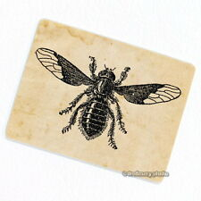 Bee Fly Deco Magnet, Decorative Fridge Garden Insects Vintage Illustration