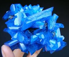 Large & - Top Luster Electric Blue CHALCANTHITE on Matrix From Poland