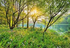 Wall mural SPRING LAKE - GREEN FOREST photo wallpaper Large Wall Art WILD NATURE