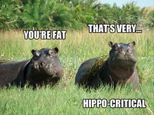 """Funny hippopotamus refrigerator magnet 2 1/2x 3 1/2"""""""