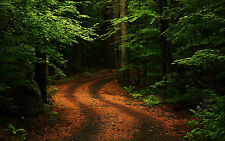 Framed Print - Winding Path through a Wooded Park (Picture Poster Art Forest)