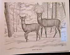 Deer Boxed Note Cards with 10 Cards &10 White Envelopes Per Box