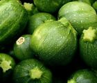 ROUND ZUCCHINI SEEDS 15+ SQUASH Vegetables COOKING culinary FREE SHIPPING