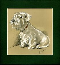 Lucy Dawson  ~ Sealyham Terrier ~  Colour Print Genuine Vintage 1946