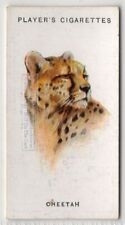 Cheetah Large Wild Cat Feline 85+ Y/O Ad Trade Card