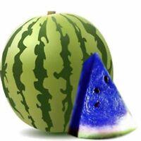 20X Selten Blau Wassermelone Samen Früchte Gemüse Pflanze Samen Garten Suprem