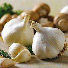 Seeds Garlic Lyubasha Winter Giant Organic Vegetable Heirloom Russian Ukraine