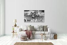 Wandtattoo Wandsticker Aufkleber Zebra Grösse: 120 x 70 cm
