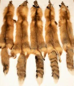 Dark Red Fox, Soft Tanned Pelt, Hide, Medium Grade darkredmg