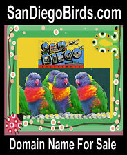 San Diego Birds .com Boarder trade  Mexico Exotic Parrots Domain Name 4 Sale URL