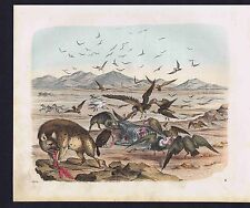 Zebra Hunt in Africa, Carrion Eaters  1854 Das Buch der Welt -Lithograph print