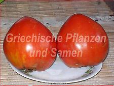 Cuore greca-tomate ** vecchia varietà NUOVO scoperto 10 freschi semi pomodori
