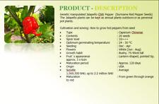 Carolina Reaper Chilli Pepper (USA) 20 x Quality Seeds