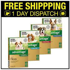Advantage Flea Spot On For Dogs (Flea Allergy Dermatitis) - 4 Pack - All Sizes